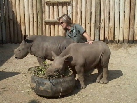 Petronel Nieuwoudt, Care For Wild Founder, with Shadow and another orphaned  orphaned black rhino calf.